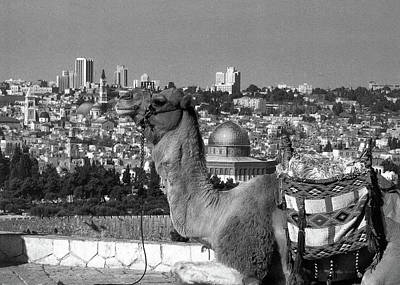Mellow Yellow - Camel in Jerusalem Black and White by Munir Alawi