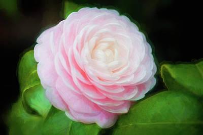Photograph - Camellias Japonica 005 by Rich Franco
