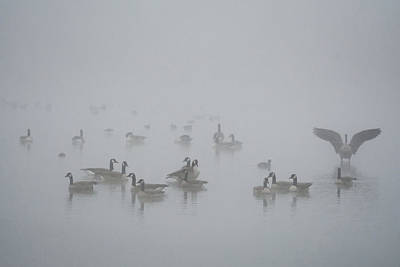 Photograph - Canada Geese In The Fog 3503-120818-1cr by Tam Ryan