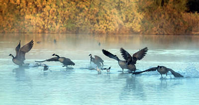 Photograph - Canada Geese In The Mist 0588-010819 by Tam Ryan