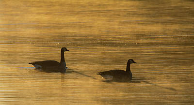 Photograph - Canada Geese In The Mist 2510-012219 by Tam Ryan