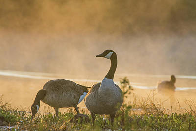 Photograph - Canada Geese In The Mist 3917-120918-1cr by Tam Ryan