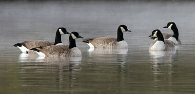 Photograph - Canada Geese In The Mist 9959-010519-2 by Tam Ryan