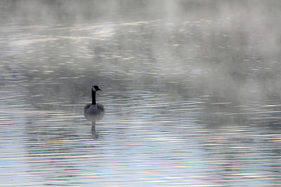 Photograph - Canada Goose In The Mist 9954-010519-1 by Tam Ryan