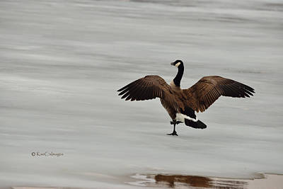 Photograph - Canada Goose On Ice by Kae Cheatham
