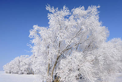 Hoarfrost Photograph - Canada, Manitoba, Oakbank by Jaynes Gallery