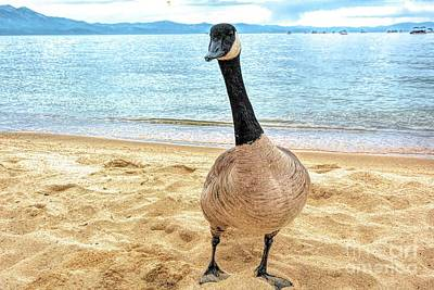 Digital Art - Canadian Goose by Joe Lach