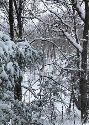 Photograph - Canadian Winter Magic by The Happy Cat