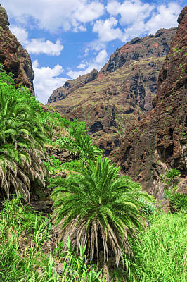 Photograph - Canary Date Palm In Masca by Sun Travels