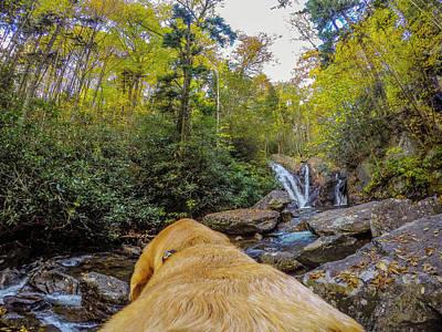 Art Print featuring the photograph Canin Creek Falls by Matthew Irvin