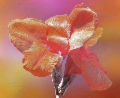 Photograph - Canna Lily by HH Photography of Florida
