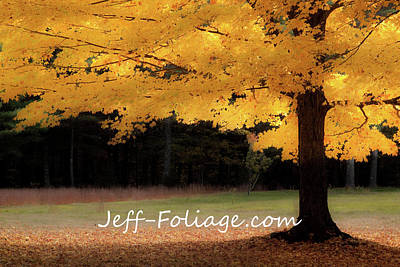 Photograph - Canopy Of Gold Fall Colors by Jeff Folger