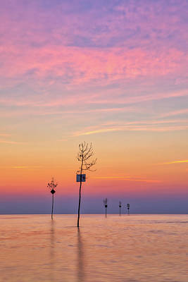 Photograph - Cape Cod Clam Trees At Rock Harbor by Juergen Roth