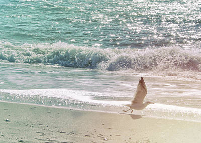 Bath Time Rights Managed Images - Cape May Seagull Royalty-Free Image by JAMART Photography