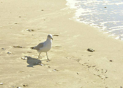 Photograph - Cape May Seagull Film by JAMART Photography