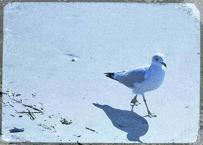 Photograph - Cape May Seagull Shadow by JAMART Photography