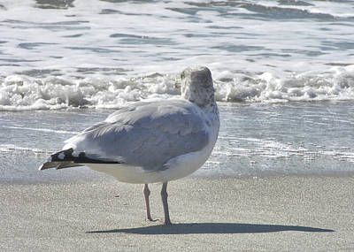 Photograph - Cape May Seagull Sketch by JAMART Photography