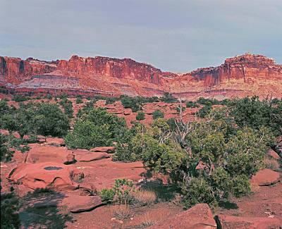 Photograph - Capitol Reef Junipers And Cliffs by Tom Daniel