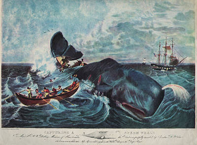 Capturing A Sperm Whale Art Print by Hulton Archive