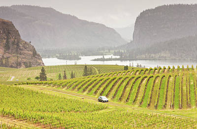 Photograph - Car Driving Through Rolling Vinyards by Imaginegolf