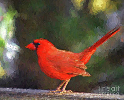 Photograph - Cardinal Art - Male Northern Cardinal by Kerri Farley