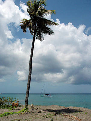 Photograph - Caribbean Afternoon by Mark Duehmig