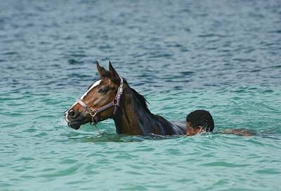 Photograph - Caribbean Swim by Fraida Gutovich