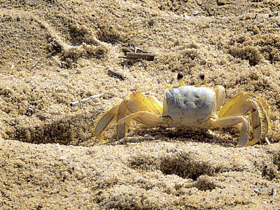 Art Print featuring the photograph Carl The Crab by Lora J Wilson