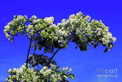 Photograph - Carly's Tree - The Sky's The Limit by Rick Locke