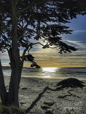 Photograph - Carmel Sunset by Sheila Skogen