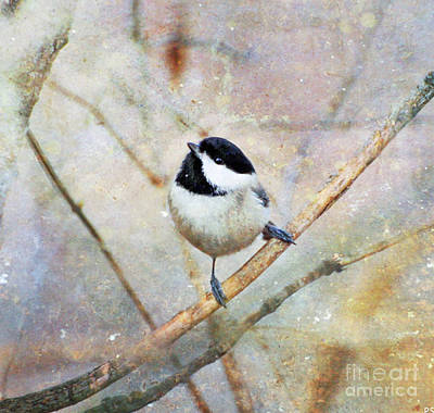 Photograph - Carolina Chickadee - Textured Art by Kerri Farley