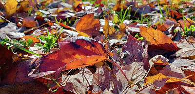 Photograph - Carpet Of Fall Colors by Jeff Folger