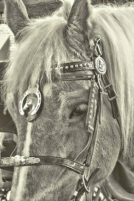 Photograph - Carriage Pony by JAMART Photography