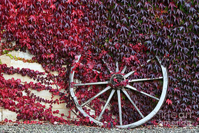 Photograph - Cart Wheel by Tim Gainey