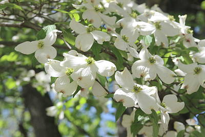 Soap Suds - Cascading Dogwoods 7 by Cathy Lindsey