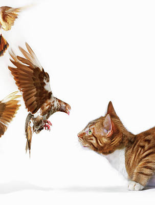 Photograph - Cat And Bird by Gandee Vasan