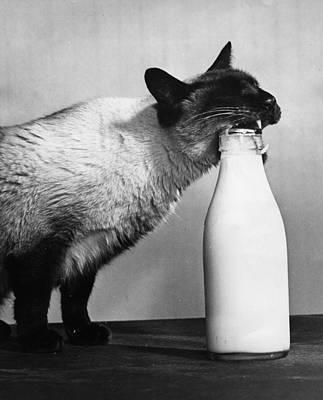 Cat Burglar Art Print by Fox Photos