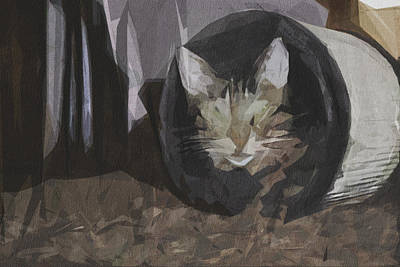 Day Of The Dead Inspired Paintings - Cat Domestic Cat Adidas Portrait by Draw Sly