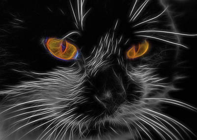 Photograph - Cat Eyes by Cathy Kovarik