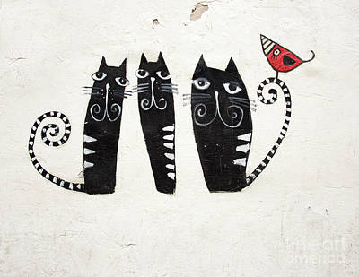 Photograph - Cat Graffiti by Juli Scalzi