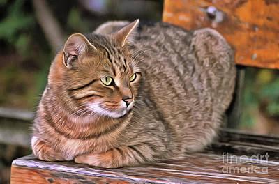 Bear Photography - Cat on bench II by George Atsametakis