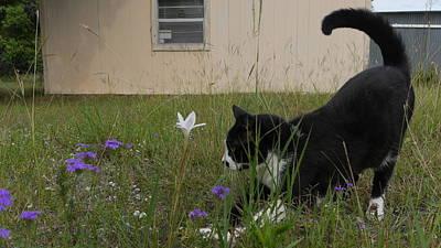 Door Locks And Handles - Cat Play by Ivars Vilums
