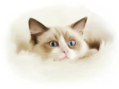 Digital Art - Cat Portraits by Alexander Del Rey