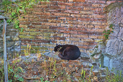 Photograph - Cat Sanctuary In Rome by JAMART Photography