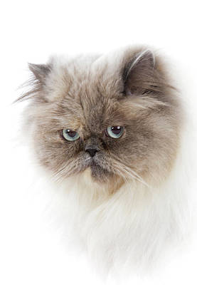 Cat With Long Hair Art Print by Www.wm Artphoto.se