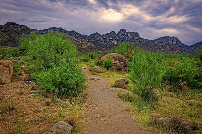 Photograph - Catalina Foothills H1120 by Mark Myhaver