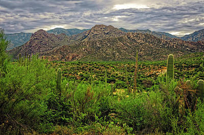 Photograph - Catalina Foothills H1130 by Mark Myhaver