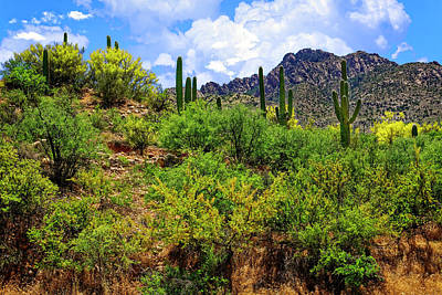 Photograph - Catalina Foothills H1528 by Mark Myhaver