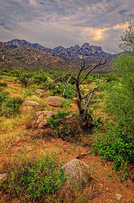 Photograph - Catalina Foothills V1100 by Mark Myhaver