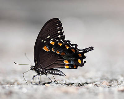 Insect Photograph - Catching Some Rays by Jody Trappe Photography